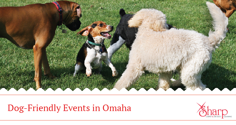 Fun Things to Do With Dogs in Omaha